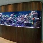 在办公室养鱼 鱼缸究竟应该怎么摆放