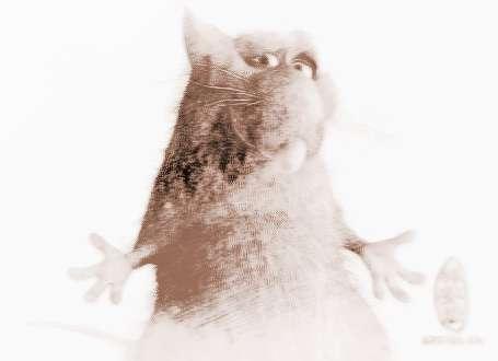 属鼠和什么属相相配