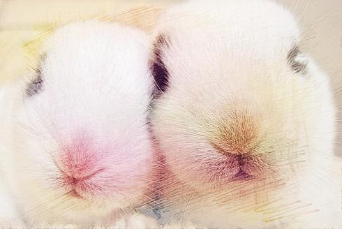 男属兔的属相婚配表是什么