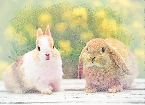 兔子是一种可爱的小动物,那您知道女属兔性格怎样嘛?
