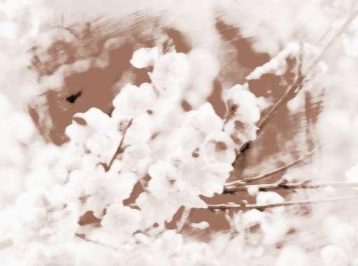 八字看桃花运何时出现_八字看女人桃花运旺几大标志