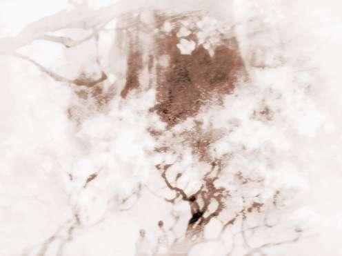【风水揭秘催旺桃花运的好方法是什么】风水揭秘催旺桃花运的好方法是什么