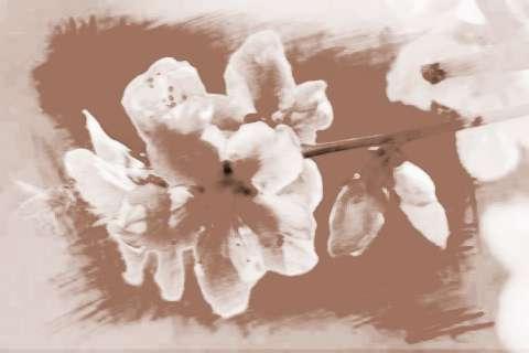 【十二生肖桃花是什么生肖】适合十二生肖招桃花运的颜色