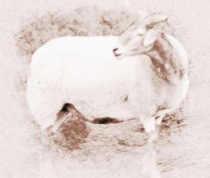 屬羊本命年要注意什么