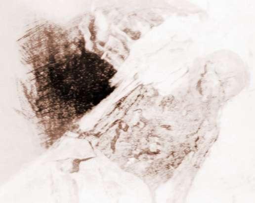 [珍妃墓被盗的历史真相]慈禧墓被盗历史真相既惨遭毁容辱尸!